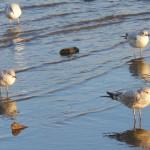 Photo: Seagulls on the Potomac River