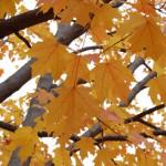 Leaves Photograph by Ellen Hamilton